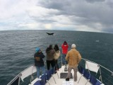 Whale Watching - Reel Affair