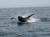Whale Watching Charter with Marine Mammal Research group